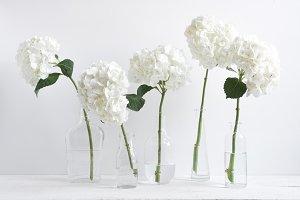 White Hydrangea Stems in Vases