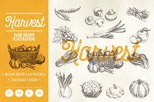 Hand drawn Harvest illustrations