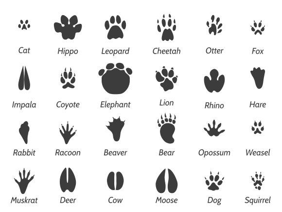 Mesmerizing image regarding printable animal footprints