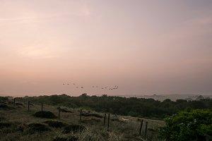 Birds in fog and sundawn