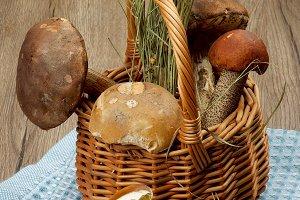 Raw Forest Mushrooms