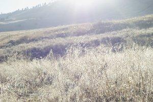 Dreamy Field on Sunlit Hillside