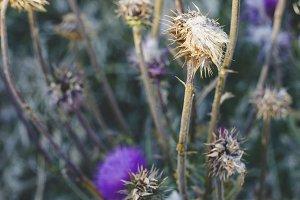 Hillside Flowers - Portrait