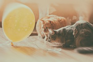 Cats and balloon