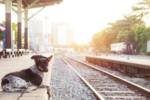 dog waiting his master at train st.,