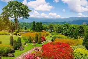 Beautiful garden of colorful flowers