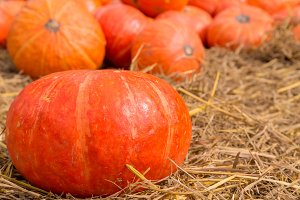 group of pumpkin on ground