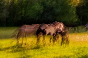 Horses on the meadow at sunset