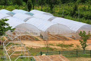 Plant nursery of oganic vegetable
