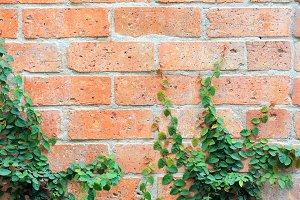 leaf on brick wall background