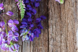 Wooden background with lupines