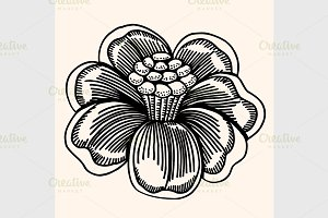 Vector flower isolated