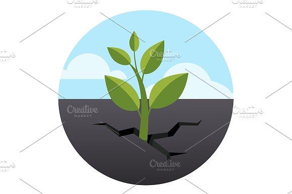 Sprout grows through asphalt ground