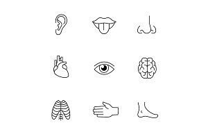Human organs, senses, and body parts