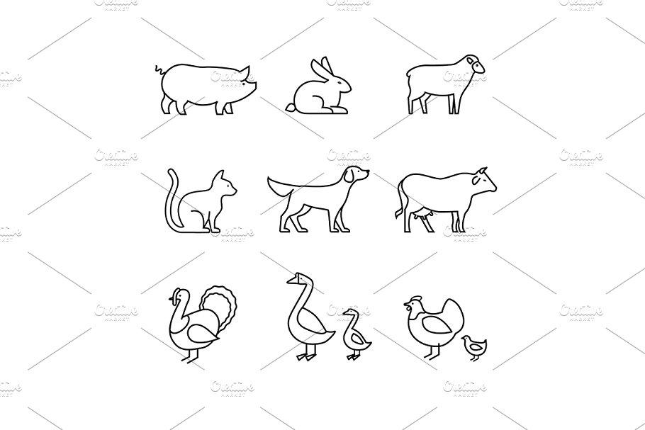 Domestic and farm animals