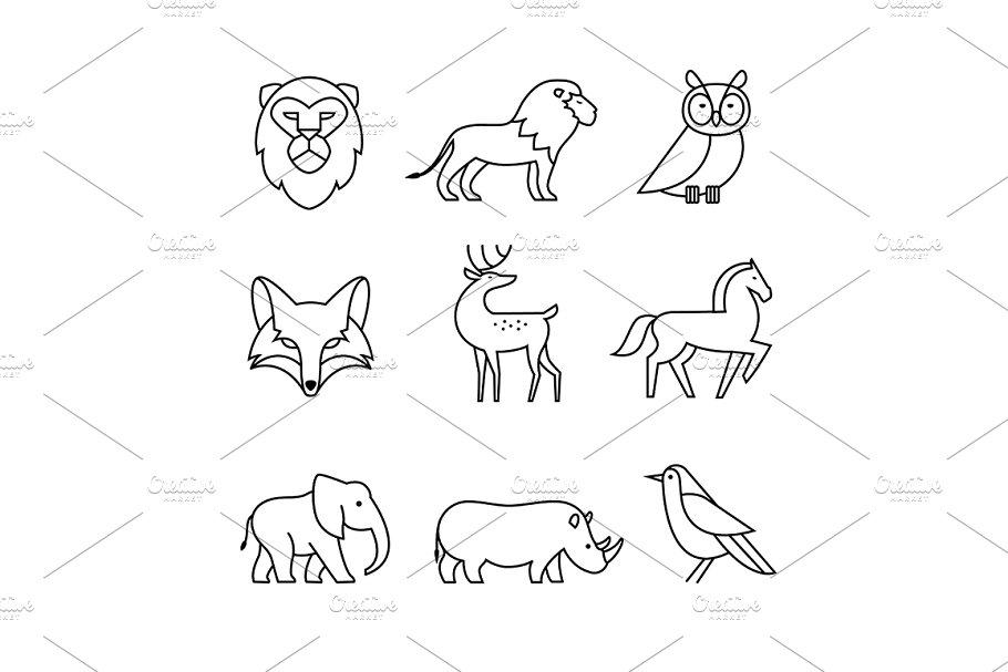 Popular wild life animals