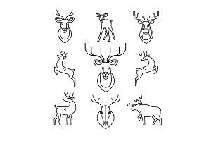 Deers, moose, antlers and horns