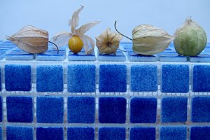 physalis of Colombia, fruit