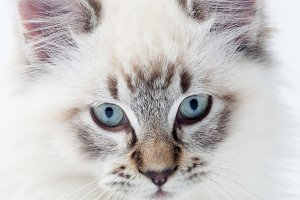 White kitty closeup portrait