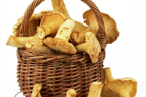 Fresh Raw Chanterelles