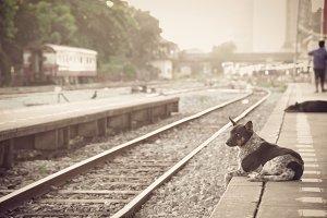 dog waiting for his master at train
