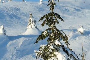 Morning winter mountain l