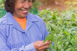 Senior farmer woman in plantation