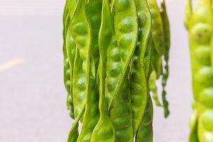 Fresh of Parkia speciosa