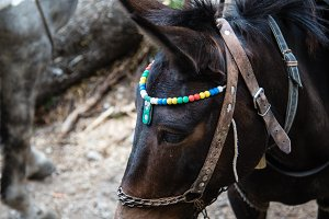 Mule with colorful head dress