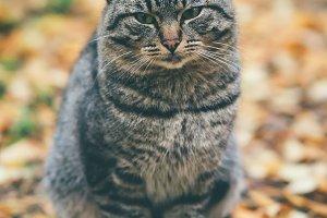 Gray Cat homeless sad Outdoor