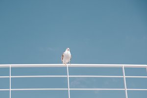 Awesome gull