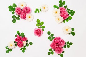 White and pink rose flowers