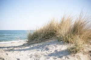 Marram grass on a sunny beach