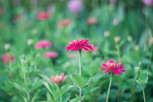 Flowers on bokeh blur background