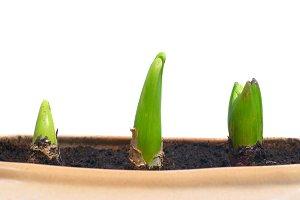 Three growing plants