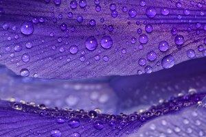 Iris secrets