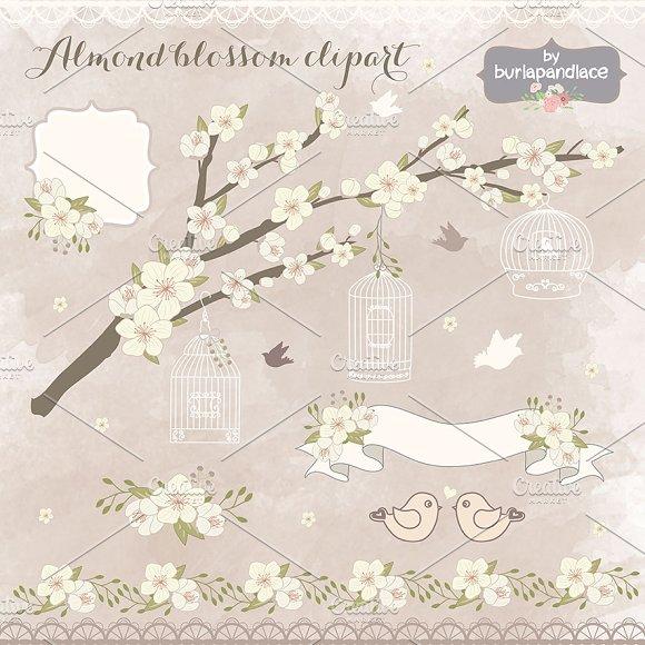 VECTOR Almond blassoom clipart