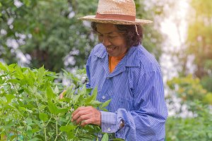 Senior farmer woman in farm