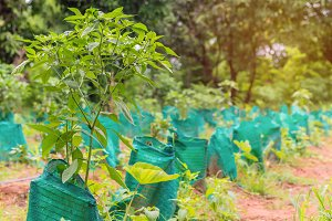plant a tree in agricultural farm