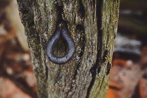 Rusty old nail