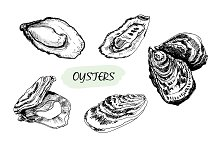 Oysters. Set of vector