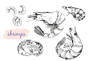 Shrimps. Vector illustrations