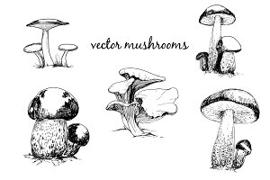 Set of mushrooms