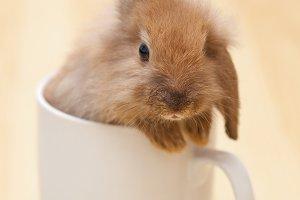 Little bunny in a mug