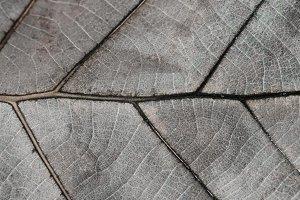Dry Leaf Macro Texture