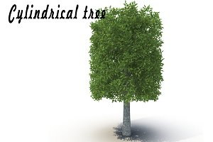 Cylindrical tree_1