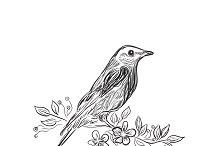 bird, sketch design, vector