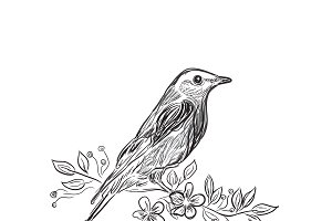 bird, sketch design, vector