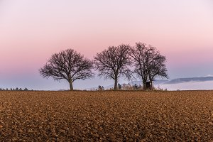 Three trees
