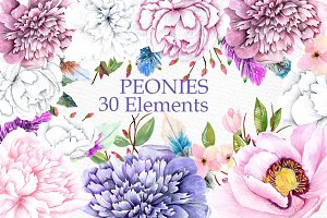 Watercolor peonies clipart